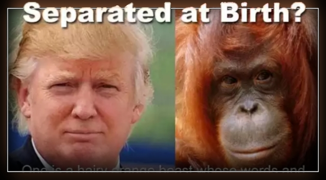 Trump's Behavior Similar To Male Chimpanzee. – Jane Goodall
