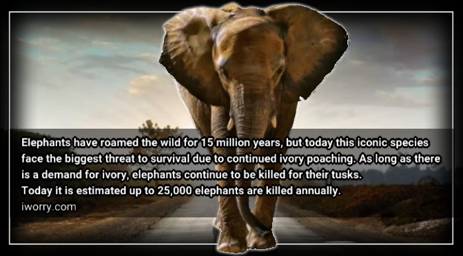 China Says It Will Shut Down Domestic Ivory Market. Yeah Right!