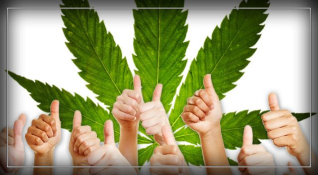 Legalisation of cannabis 'only solution to crime and addiction problems'.