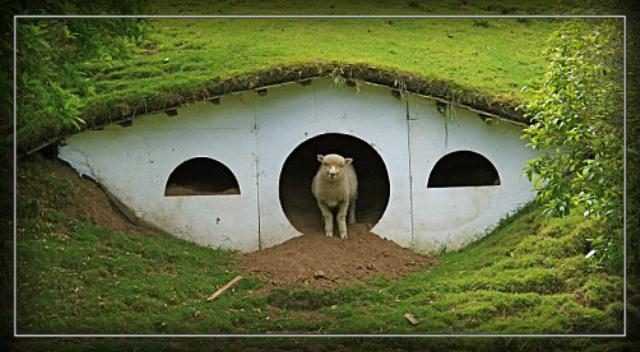 Image result for redneck dog house