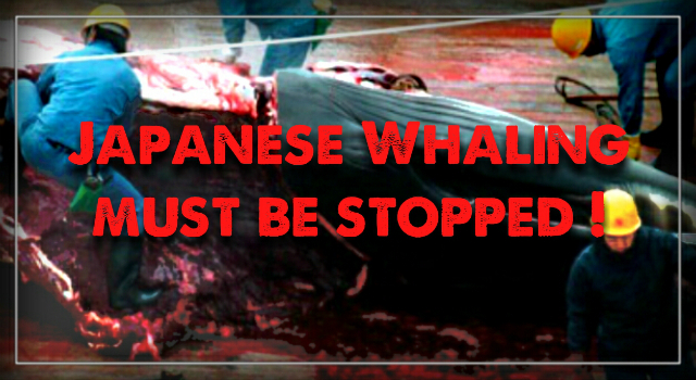 Japanese Whaling Criminals are on their way south.