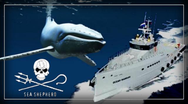 Custom-built anti-whaling Ocean Warrior set to change the game – Sea Shepherd.