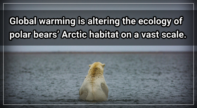 Without action on climate change, say goodbye to polar bears – Darryl Fears.