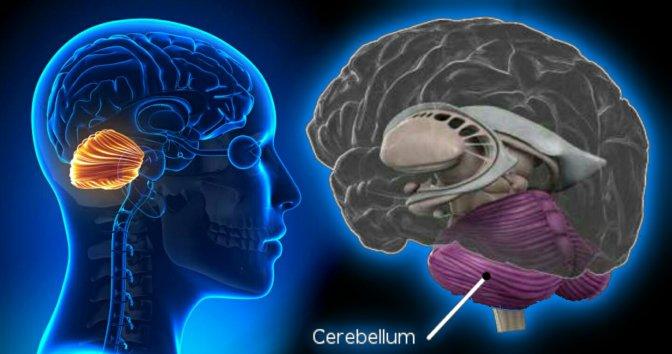 Cerebellum Studies Challenge Ancient Notions of How We Think – Christopher Bergland.
