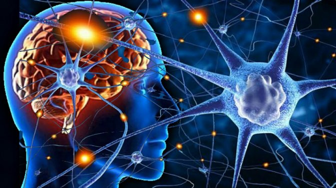 MINDING THE BRAIN. Neuroplasticity in a Nutshell – Daniel J. Siegel MD * Neuroplasticity – Wikipedia.