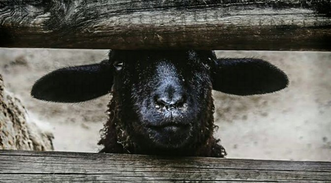 BEING THE BLACK SHEEP. Coping with a Marginalizing Family – Vinita Mehta Ph.D., Ed.M. * The communicative process of resilience for marginalized family members – Elizabeth Dorrance Hall.